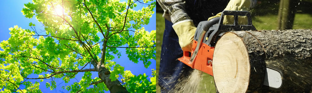 Tree Services Bothell